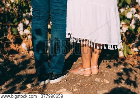 Couple Legs In Cotton Field, Back Side. Woman In White Dress And Man In Blue Jeans And White T-shirt
