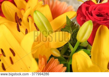 Close Up Of Beautiful Bouquet Of Mixed Flowers. Bright Colorful Mix Of Lilies, Roses, Gerberas. Bunc