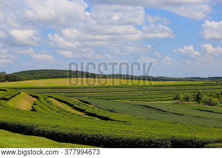 Background Tea Plantations, Mountains And Beautiful Skies