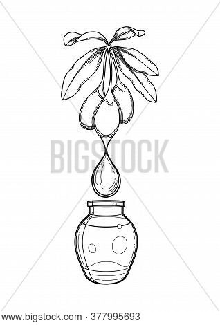 Graphic Essential Oil Bottle Decorated With Goji Plant