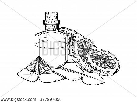 Graphic Oil Bottle Surrounded By Bergamot Fruits And Leaves