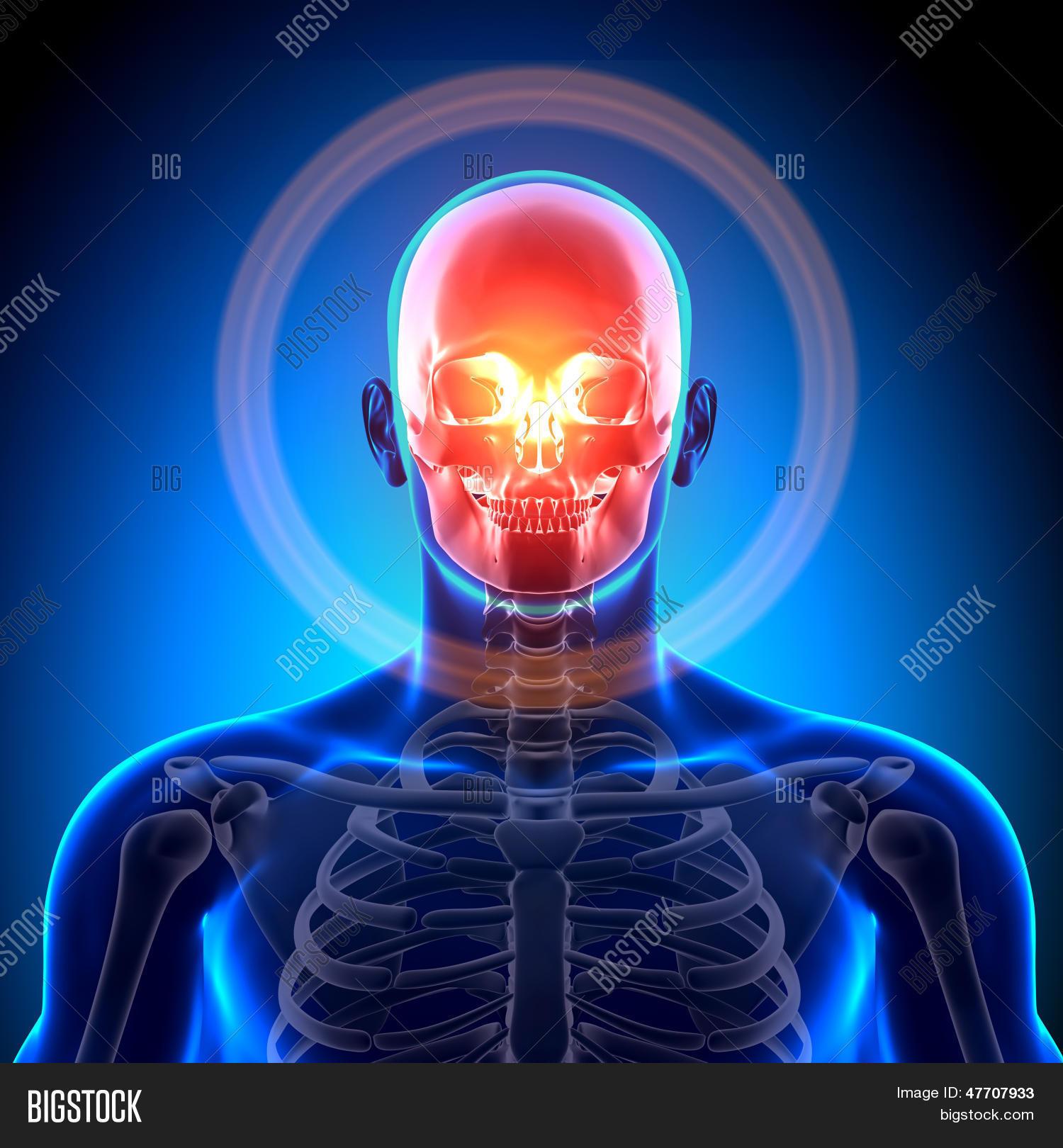 Imagen y foto Cráneo / Cráneo (prueba gratis) | Bigstock