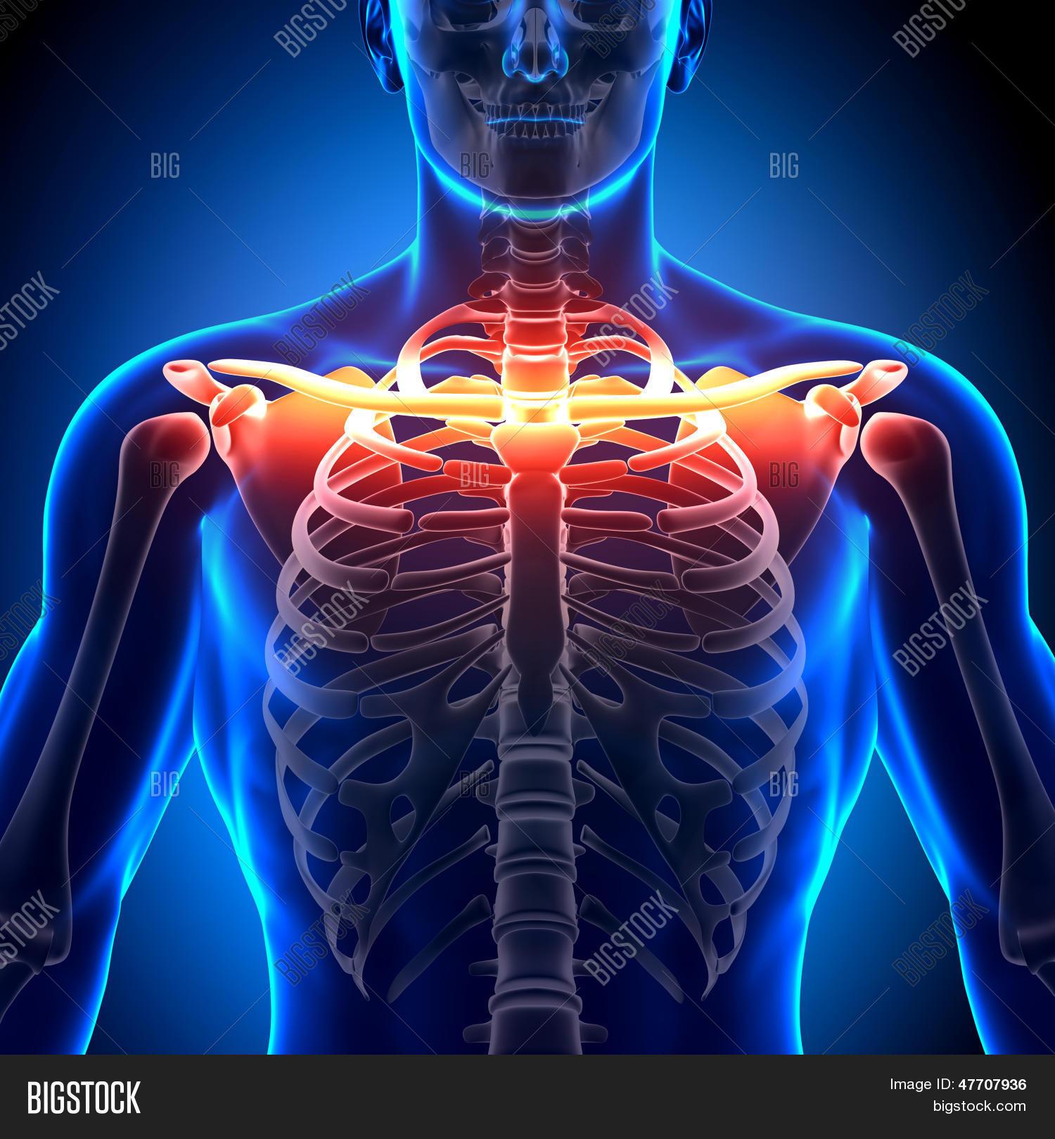 Imagen y foto Anatomí ósea De (prueba gratis) | Bigstock
