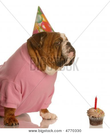 Bulldog Birthday Dog With Cupcake