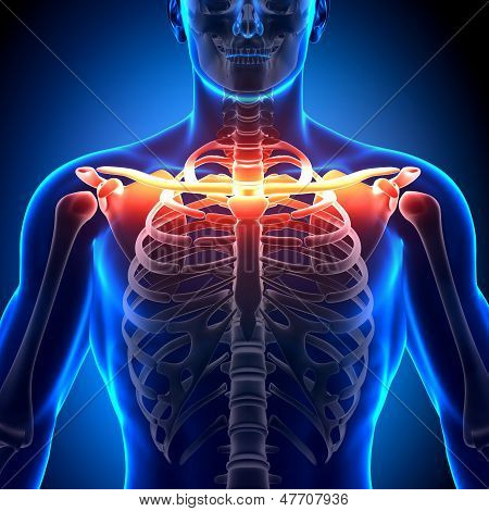 Anatomia do osso clavícula - anatomia ossos