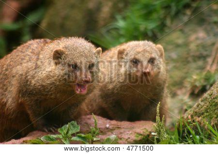 Wild Couple
