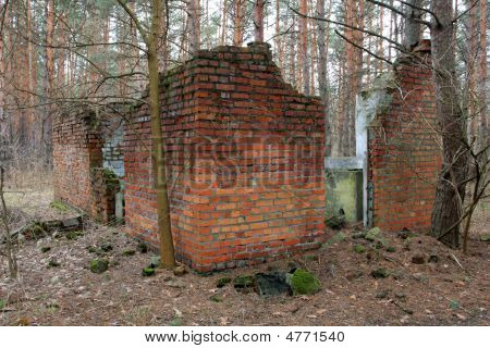 Ruins In Forest