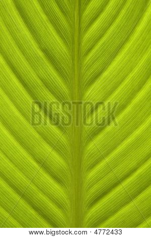 Close-up of leaf green texture visable vertical image poster