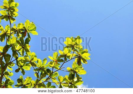 Fresh Green Leaf And Blue Sky