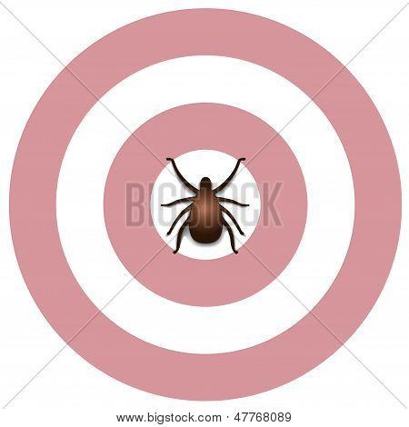 Lyme Disease, Tick, Bulls Eye Rash