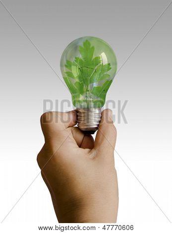 Light Bulb With A Leaf Inside