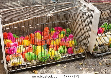 Colorful Chinks In The Cage