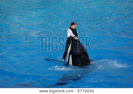Lovely Killer Whale
