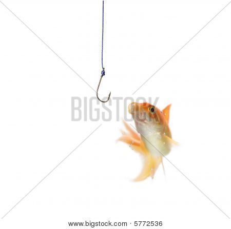 gold fish and empty hook on white background poster