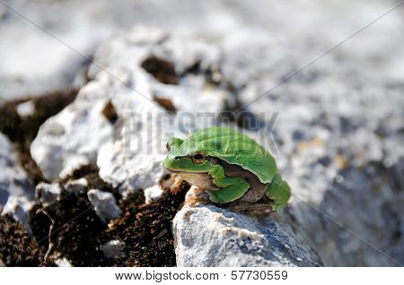 Frog in the wild