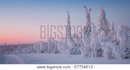 winter landscape in Lapland