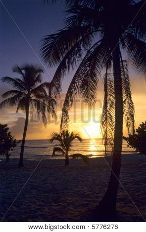 Sunset On Palm Trees At Bayahibe Beach