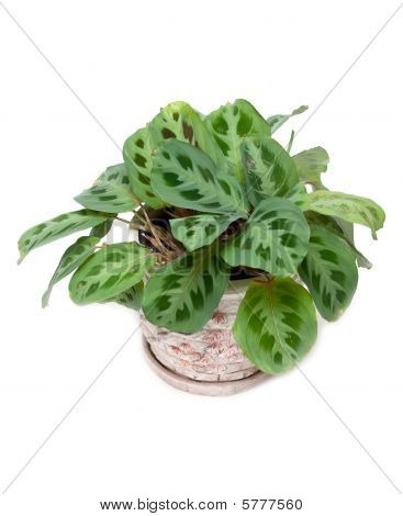 Green home flower in pot on white background poster