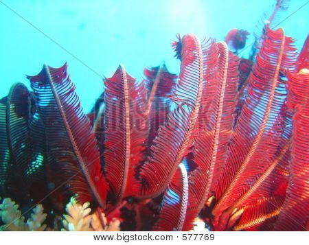 Coral Life1