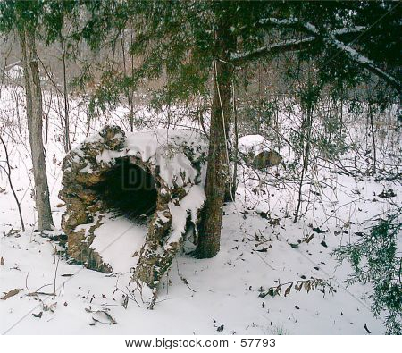 Hollow Log In Snow