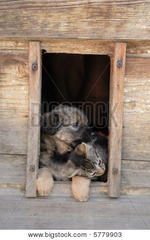 Cat Nad Dog