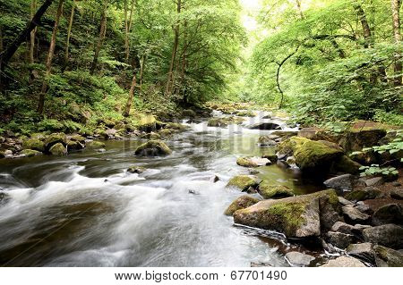 the Harz National Park