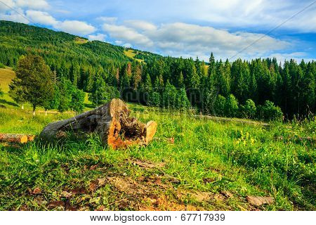 Log On A Hillside Near The  Forests