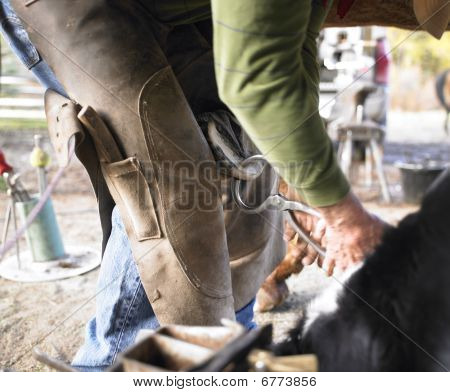 Farrier Clipping Horse Hoof