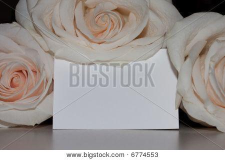 Peach Roses On Card