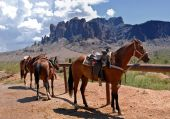horses and thier saddles in the arid southwest desert with mountain background poster