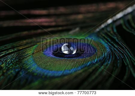 Beautiful feather with water drop close-up
