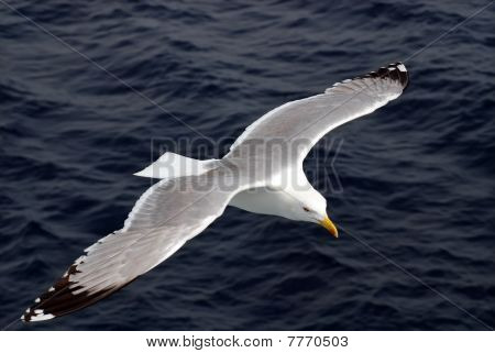 seagulls in flight over the sea during the day poster
