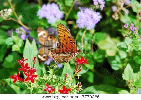 Butterfly Climbing Flower