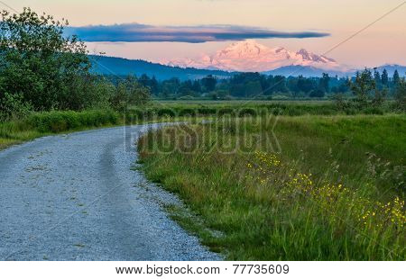 Distant Mount Baker In Pink Sunset Light