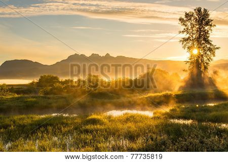 Yellow Misty Landscape With Mountains