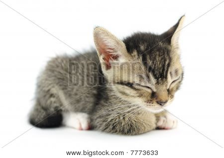 Lovely kitty sleeping in isolated white background poster