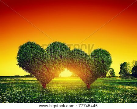 Heart shape trees couple on green grass field landscape at sunset. Love symbol, concept for Valentine's Day, wedding etc.