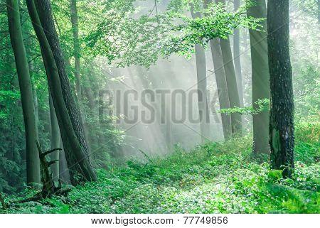 Misty Atmosphere