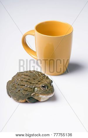 reptiles on white background