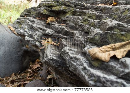 Leaves on a Rock