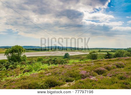 Arne Heathland In Dorset