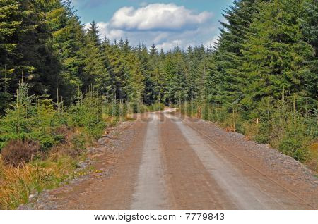 Forest dirt track