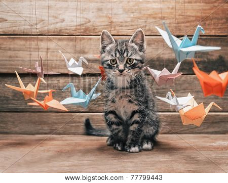 Kitten Sitting Among Paper Origami Cranes