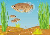 A variety of aquarium fish. Aquarium fish in their natural habitat. poster