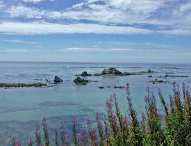 Ocean flowers