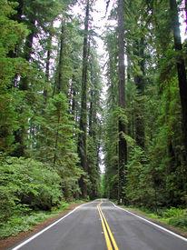 Road thru the Redwoods