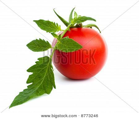 Ripe Tomato With Leaves