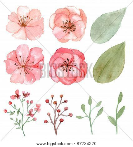 Set Of Flowers And Leaves