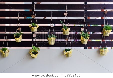 Outdoor Foliage Plant In Pots Hang On Battens