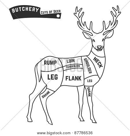 Deer meat cuts